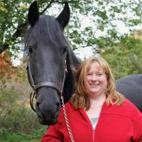 Magnificient Friesian horse