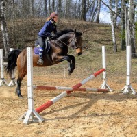 Hollywood, 7yo mare for an ambitious hobby-rider