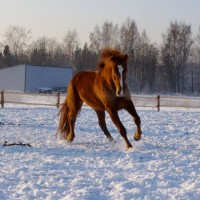 Dressage/ allround/ family horse