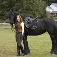 Incredible Black Friesian Horse For Sale