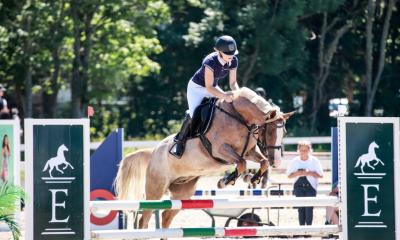 Takistussõidu hobune