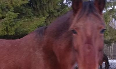 mära Frantceska