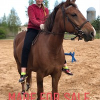 For sale mare