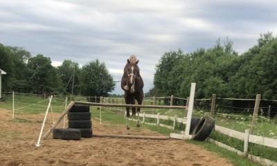 4yo stallion