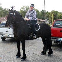 outstanding friesian horse  for sale