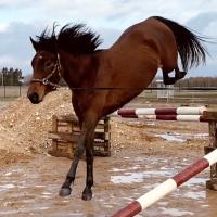 3 aastane mära