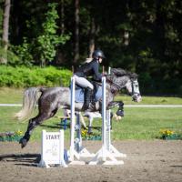 Eesti poni Antonio