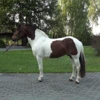 Super cute gentle Pony