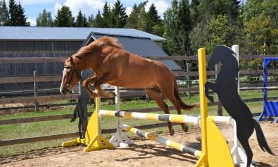 eesti tõugu hobune