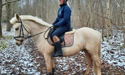 Eestonian horse pony Ruja