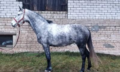 Silver Celeste