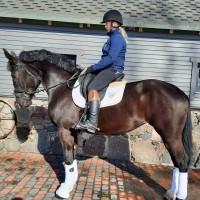 Sporthorse Blenda Princess