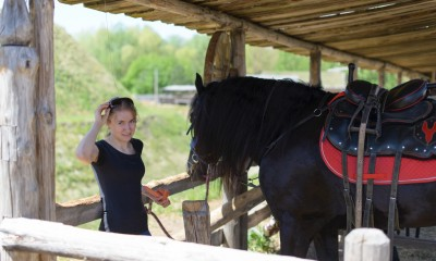 Black Friesian Horse for sale