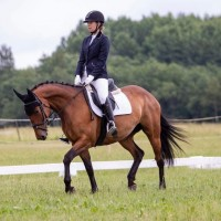 Sporthorse Hyrrem