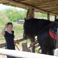Black Friesian Horse for sale