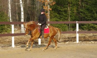 Sportlik eesti tõugu ruun